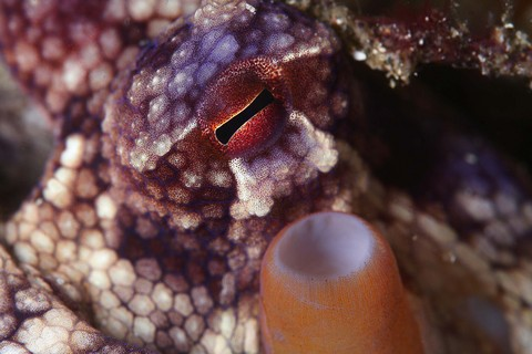 タコの眼 雲見ダイビング Kumomi Diving