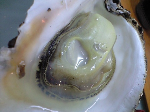 牡蠣の炭火焼 南三陸町志津川