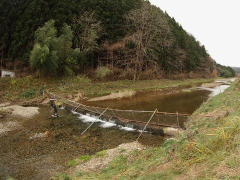 志津川のサケの遡上