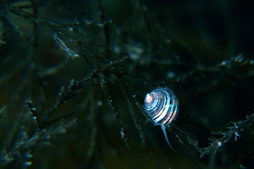 巻貝の仲間